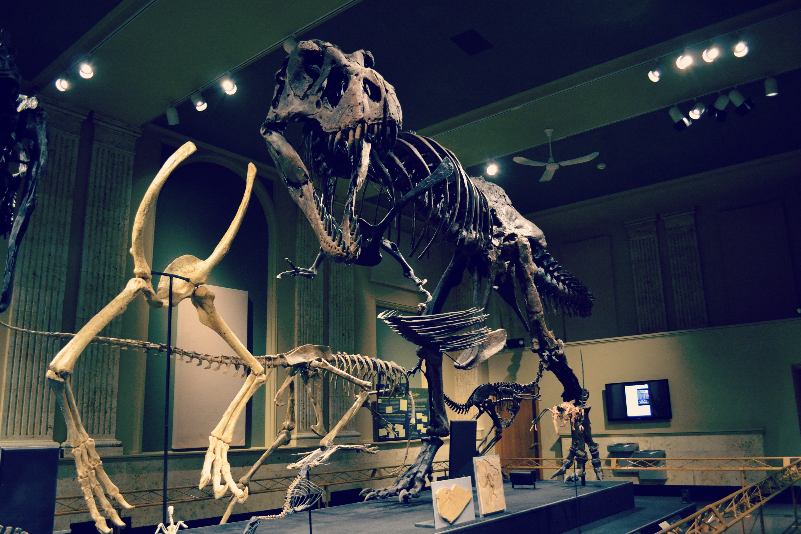 Family fun review dinosaur discovery museum in kenosha Dinosaur museum ohio